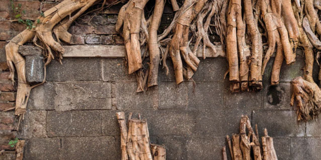 Cut roots on a wall