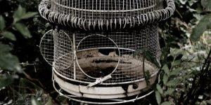 An open bird cage