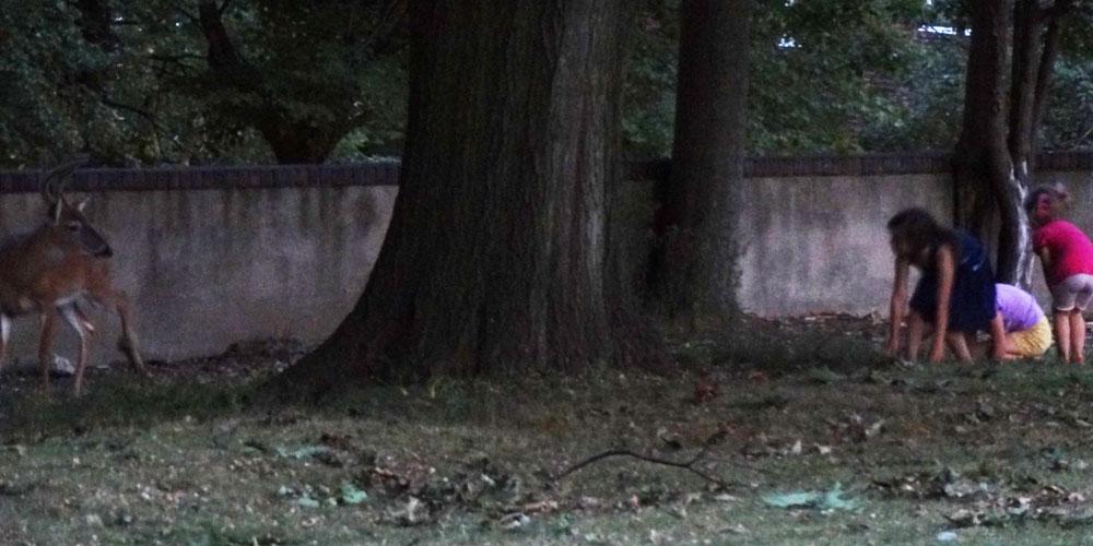 Children sneaking up on a deer