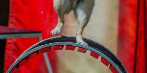 A dog in the circus
