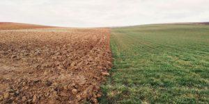 A field split between dirt and grass